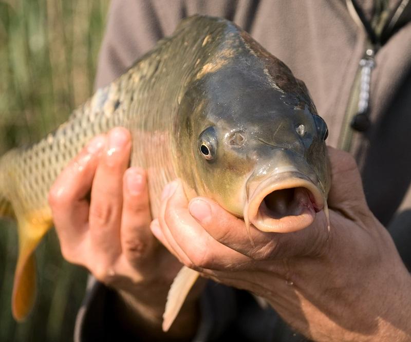 Baza piscicola Doripesco pescuit sportiv si traditional|365romania.ro