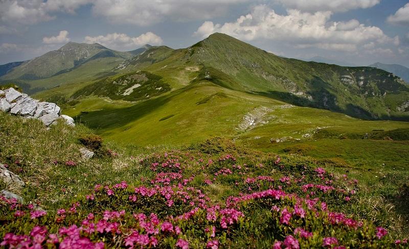 Parcul National Muntii Rodnei atractii turistice Bistrita Nasaud| 365romania.ro