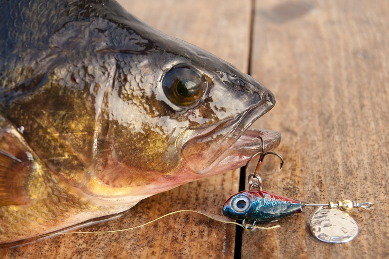 Balta Magura 9 pescuit sportiv crap|365romania.ro
