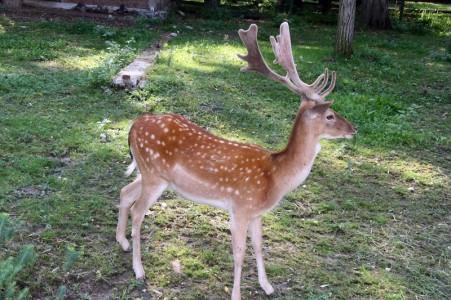GRadina zoologica Ramnicu Valcea Judetul Valcea | 365romania.ro