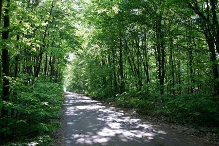 Parcul Natural Comana Manastirea Comana|365romania.ro