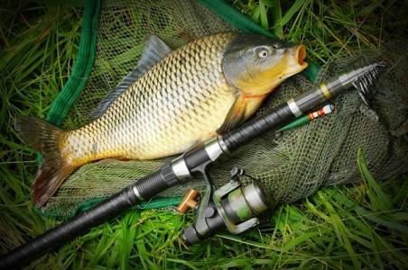 Ferma piscicola din Sanpaul pescuit crap|365romania.ro
