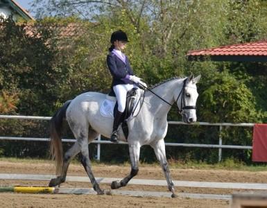 Pony Club Arad echitatie calarie | 365romania.ro