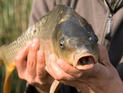 Balta Albina relaxare pescuit|365romania.ro