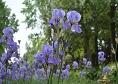 Gradina botanica din Jibou|365romania.ro
