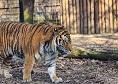 Gradina Zoologica Targu Mures|365romania.ro
