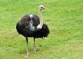 Gradina  Zoologica Timisoara animale|365romania.ro