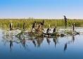 Delta Dunarii|365romania.ro