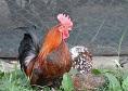 Ferma Animalelor Pantelimon | 365romania.ro