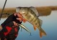 Lacul Vanatori plaja pescuit|365romania.ro