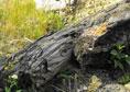 Rezervaţia naturala Padurea Alexeni Ialomita obiective turstice | 365romania.ro
